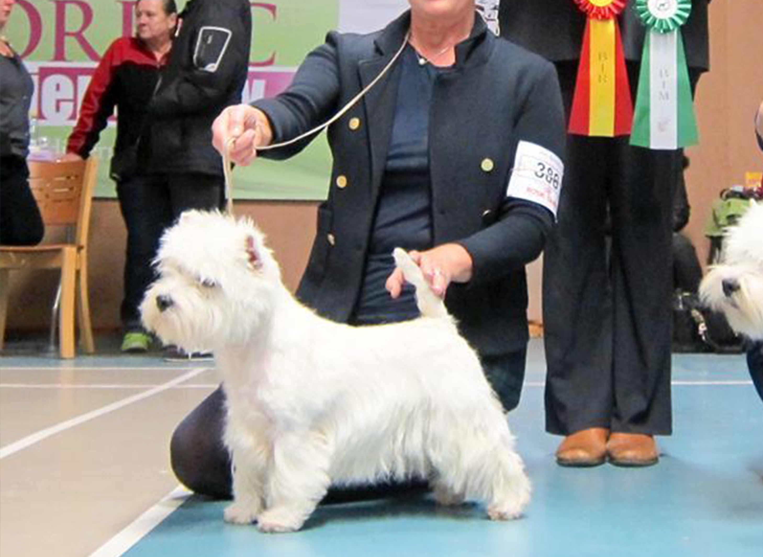 RebelionBOBWestie Sweden Champion