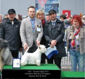 westie male zoro best in show
