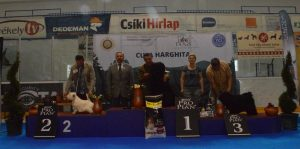 Izy  RES BEST IN SHOW